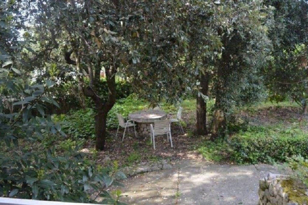 A1-Margerita(2+2): garden