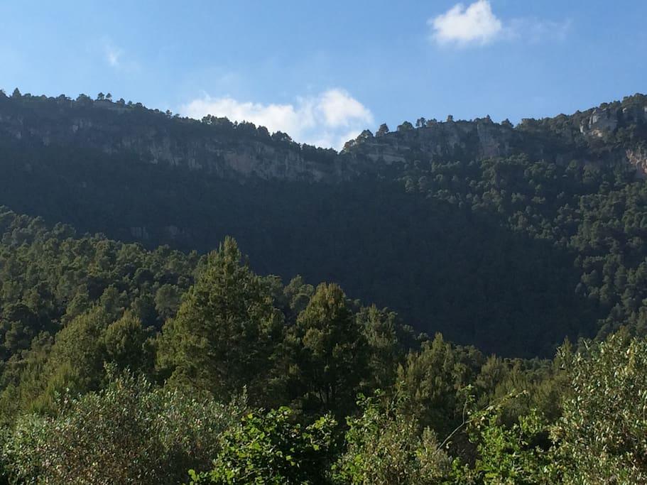 El bosque de la finca