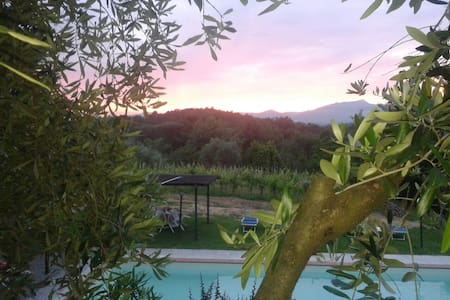 The wonderful  B & B Alloro located in the hills and vineyards of Lucca, just a short walk from the medieval village of Montecarlo. you can enjoy the simple life typical the countryside enjoying the peace and quiet.bring your pet