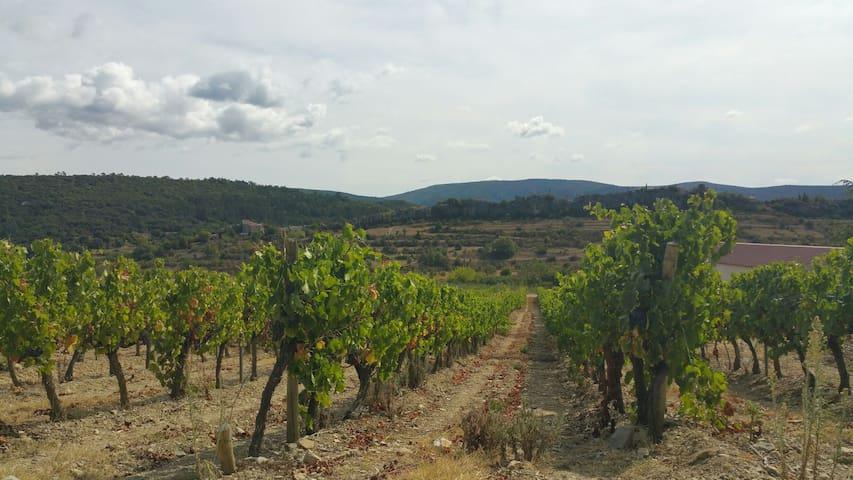 Les vignes (proche des gorges de l'Ardèche)
