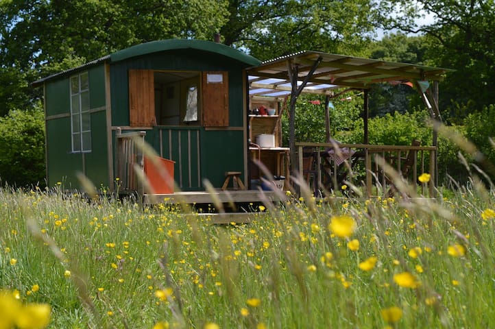 Quirky hut in a meadow    - Brilley