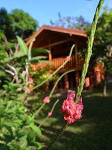 Tierra y fuego jungle house - montezuma