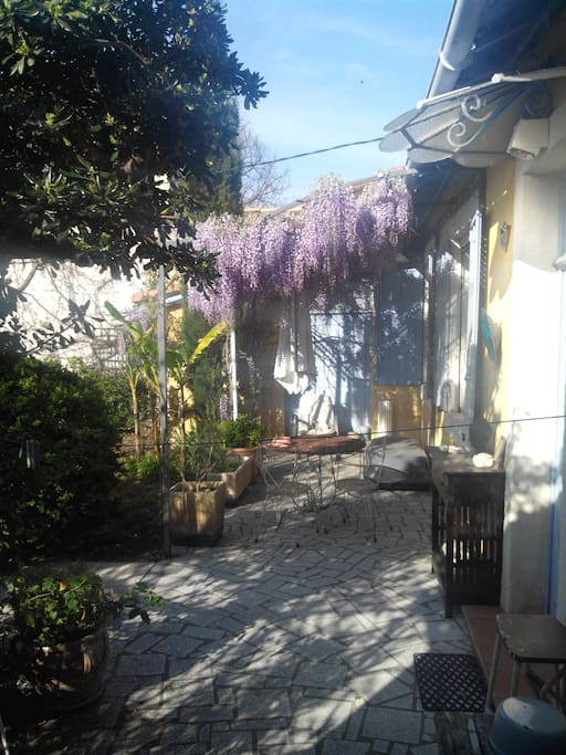 En fleurs et très odorante au printemps... Vue de la fenêtre de la chambre