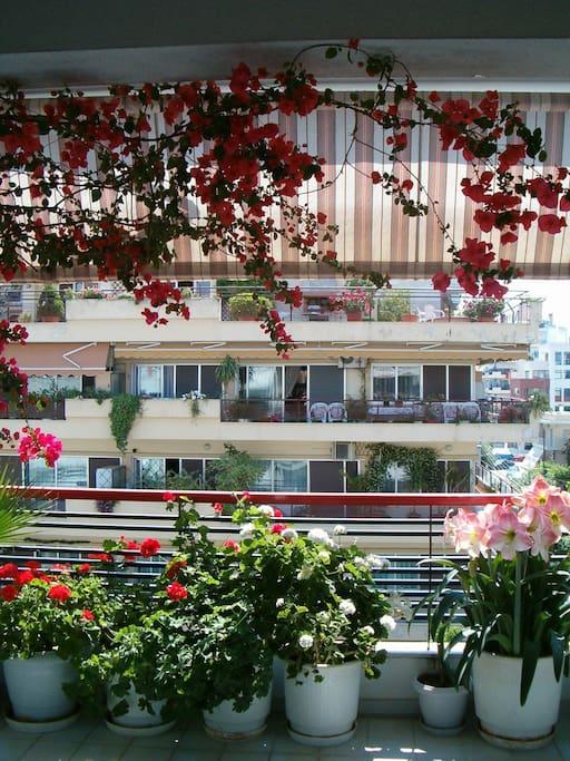 Balcony of the apartment