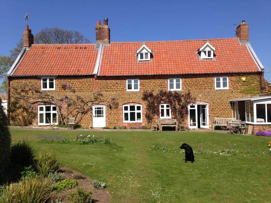 Our home & Saffie the Lab in lovely sunny garden.