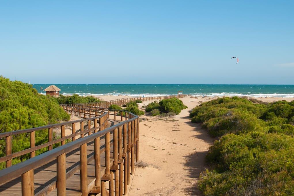 Paisaje dunar y pinos. Pasarena de acceso a la playa de la Marina.