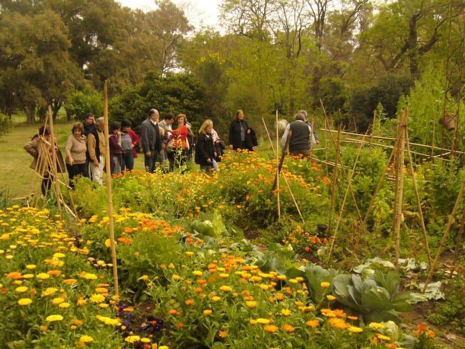 Huerta agroecologica