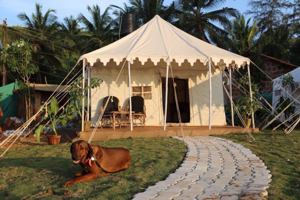 Glamorous tent outside for new experience lovers