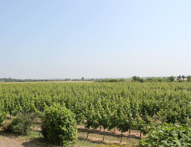 vineyard-View - Bad Dürkheim