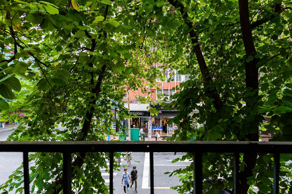 沿街绿荫丛丛