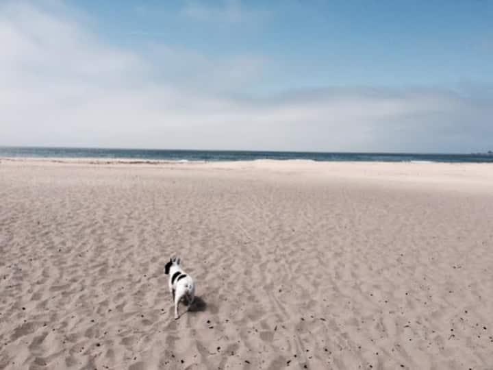 Pleasure Point Beach Bungalow