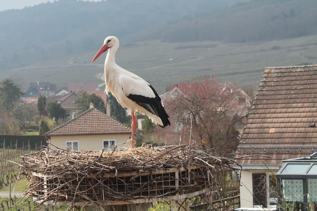 le nid de cigogne de la maison d'hôte