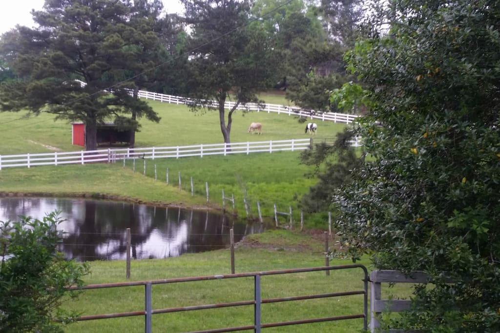 Pasture with horses and ponds.