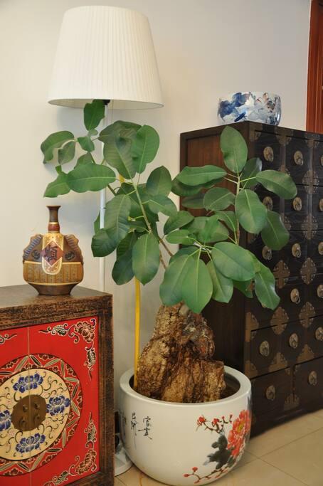 绿植,给房间带来一抹春意。