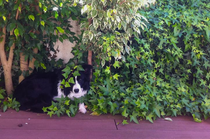 This is Grace´s favorite spot. She´s our sweet and very smart border collie.