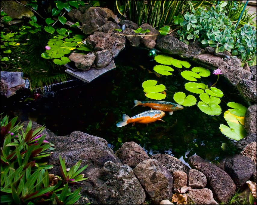 Large koi pond. One of six water features in the gardens.