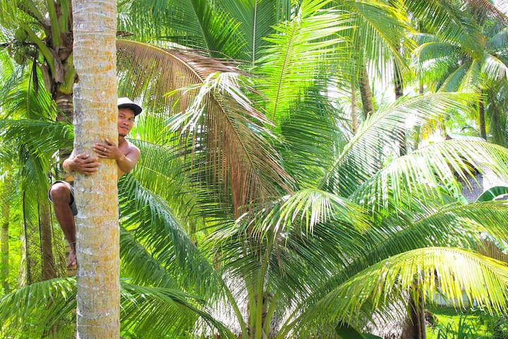 Our gardener getting coconuts