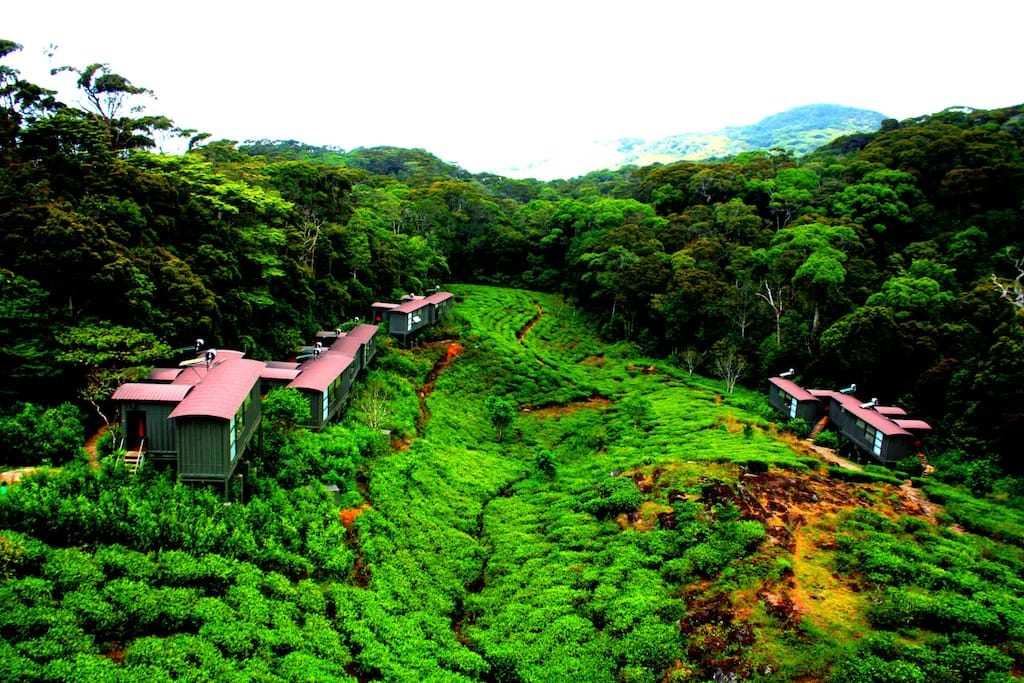 The Chalets towards  the Sinharaja Rainforest