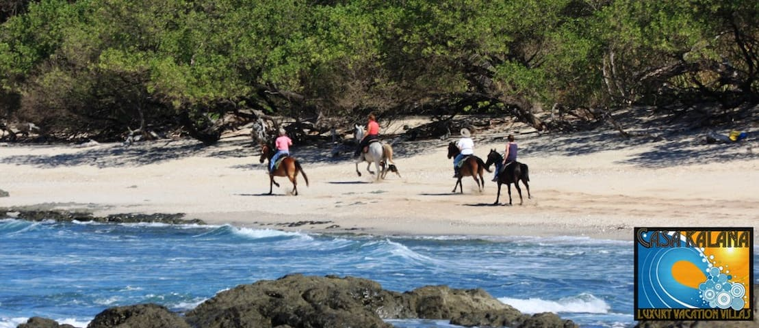 We organize Horse back tours along the beach or in the mountains for you or your group - Come stay with us!
