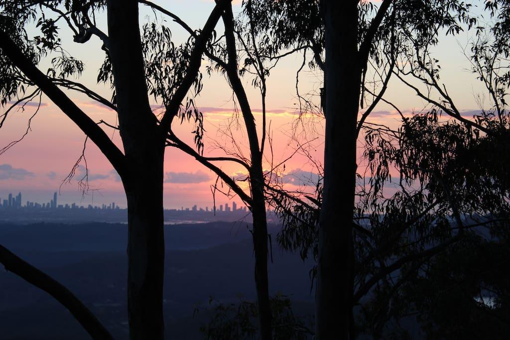 Sunrise through the gum trees.