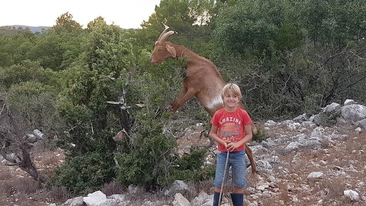 Le Paradis en famille dans un Parc Animalier