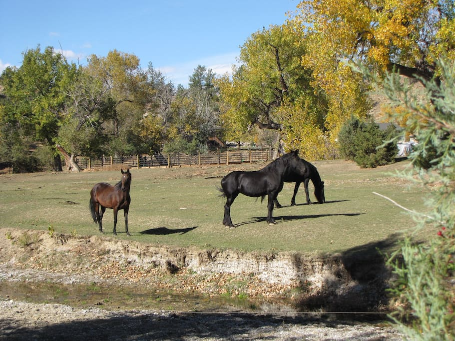 The view, just steps away from your door.  The horses belong to the neighbors, but we get to enjoy their beauty!