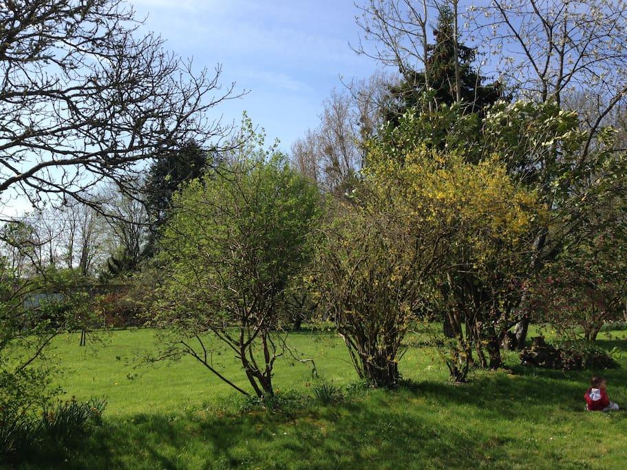 Grand jardin dégagé !
