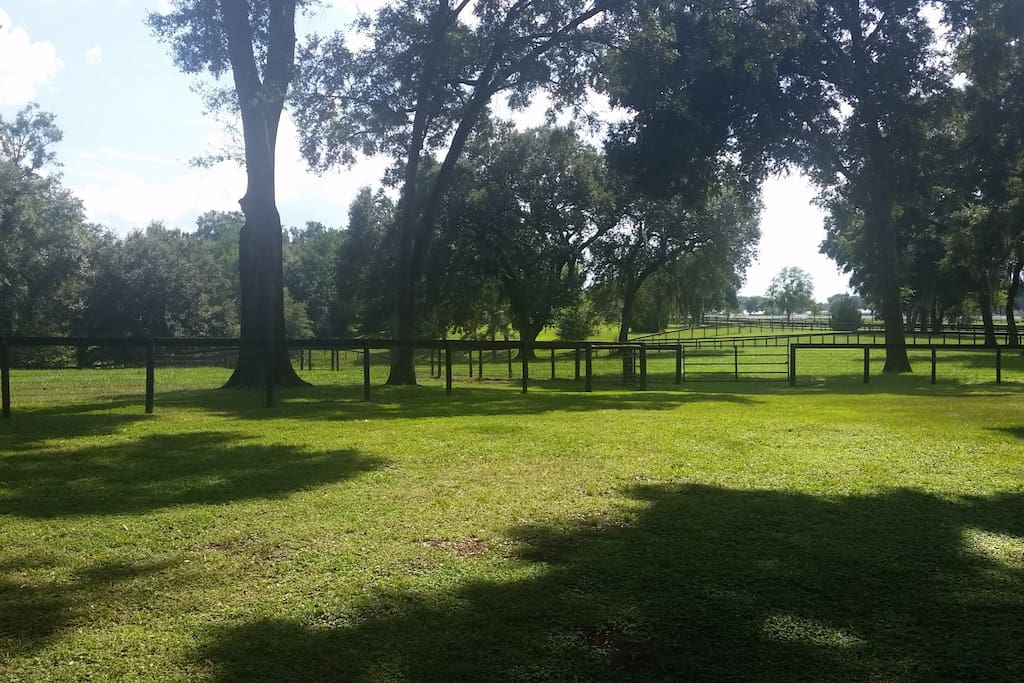 Turn out paddocks available!