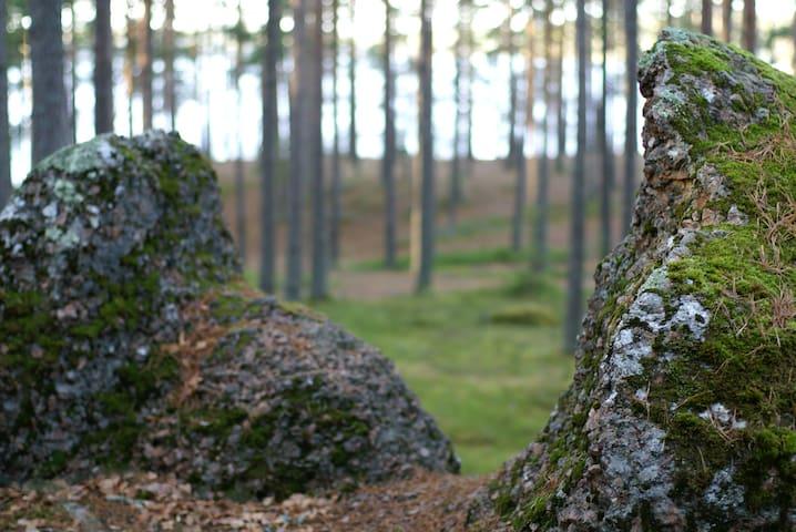 Экодомик в сосновом лесу на берегу