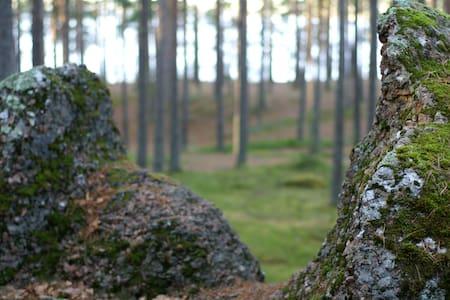 Экодомик в сосновом лесу на берегу - Vyborgsky District