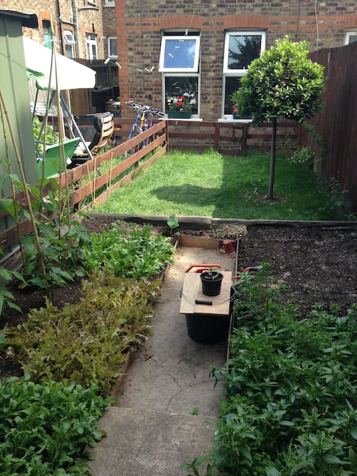 Our veggie patch at the back