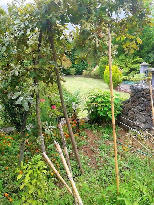 Perspective from the garden of the house...to another family garden