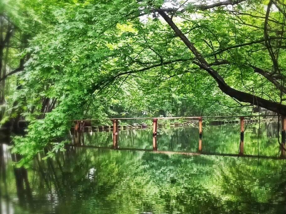 距离民宿最近的西溪南古村落的风杨林水上木桥。夏天绿色迷人眼!