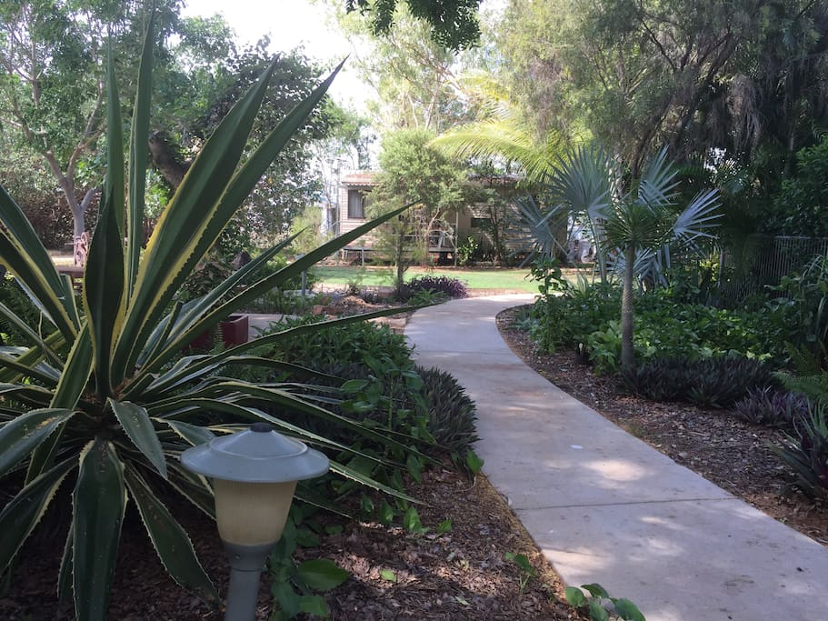 Pathways around our shady and calm garden