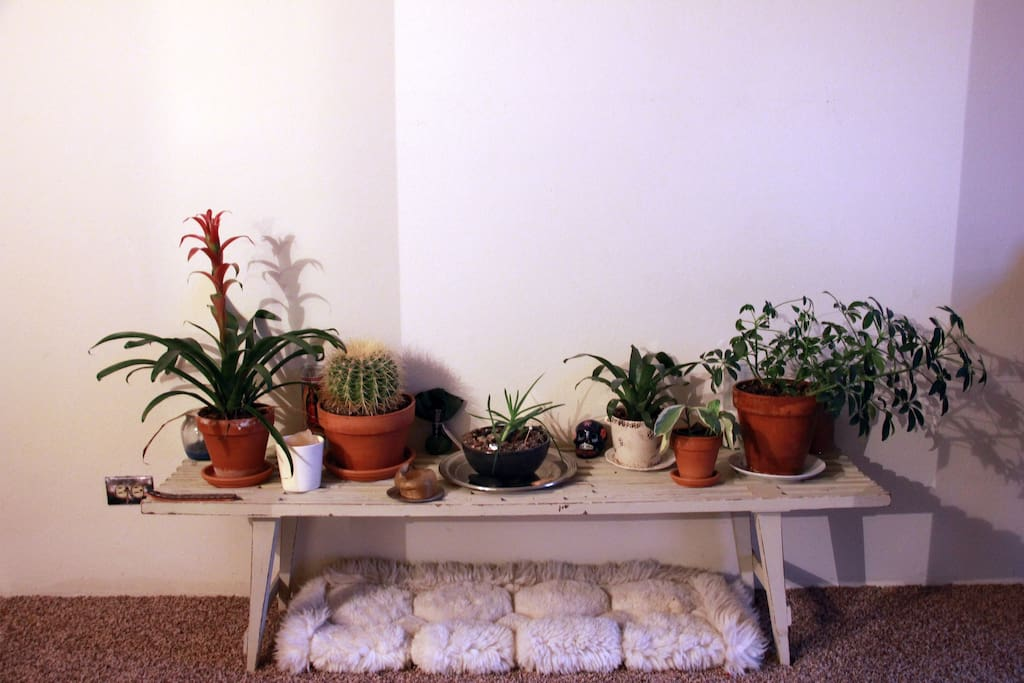 Our home has many plants, we love them!