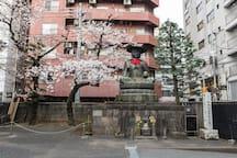 Local Shrine in Sakura time