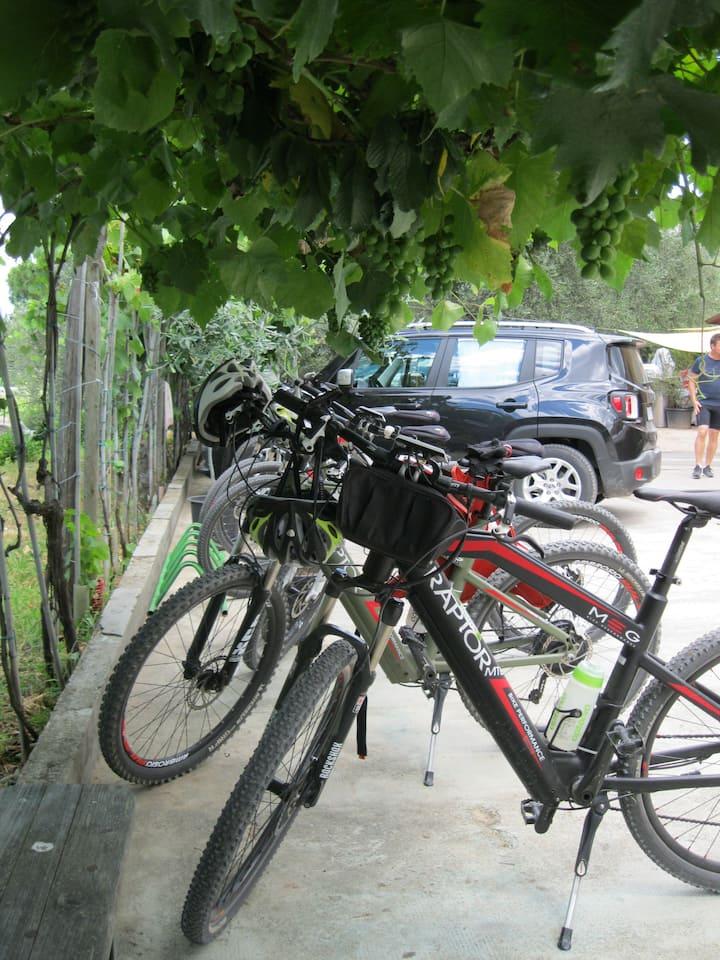 Le nostre e-bike