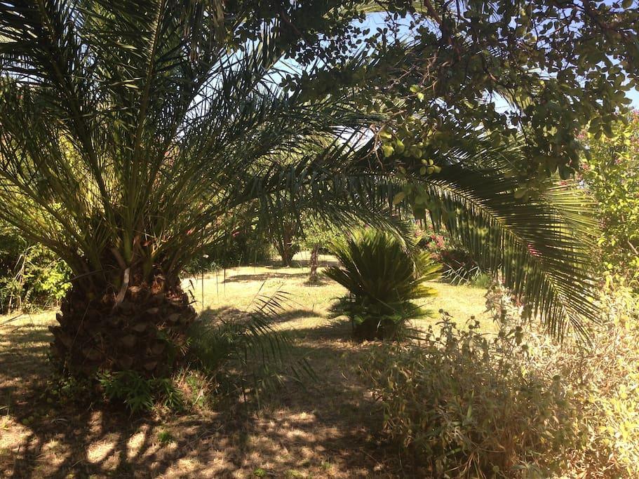 Jardin arboré de 700 m2