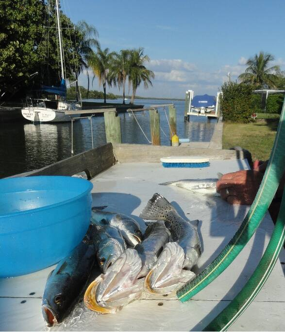 Free dock pets ok bright updated apartments for rent in for Dock fish cleaning station