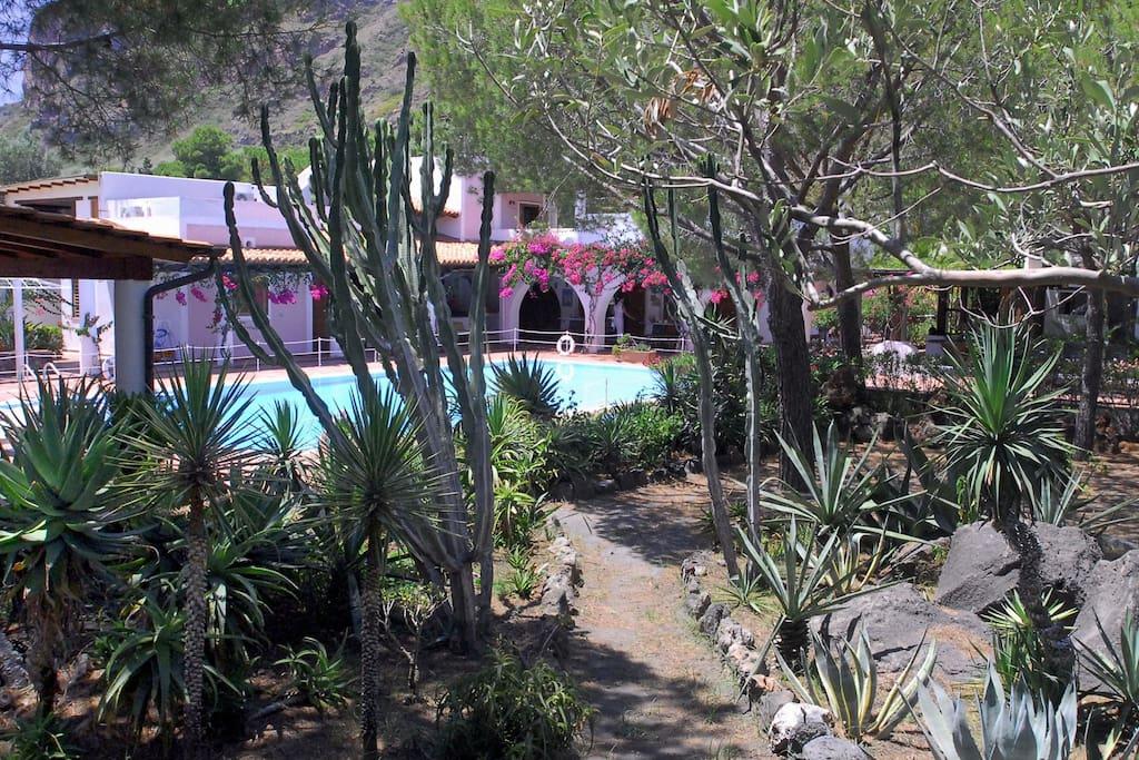 Il giardino e le piante mediterranee