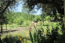 Vegetable garden and a path to a nice walk on the farm