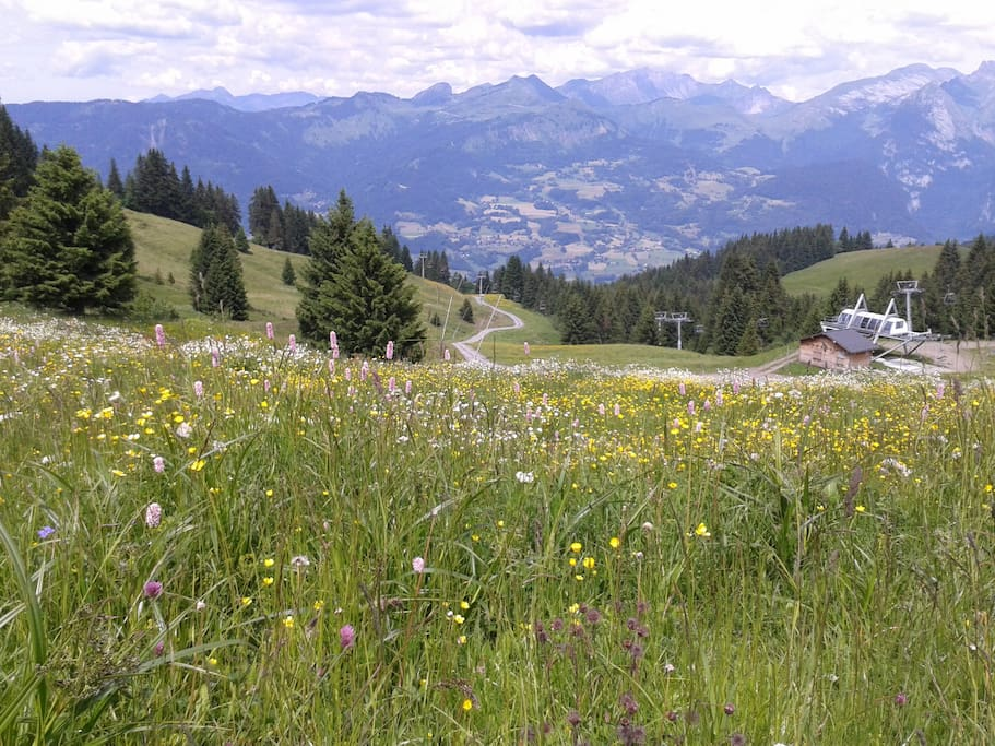 Beautiful mountain walks from the chalet