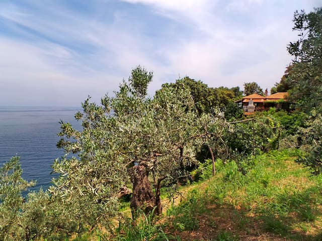 Villa Elitsa in mt. Pelion Greece next to Zagora - Pouri - Villa