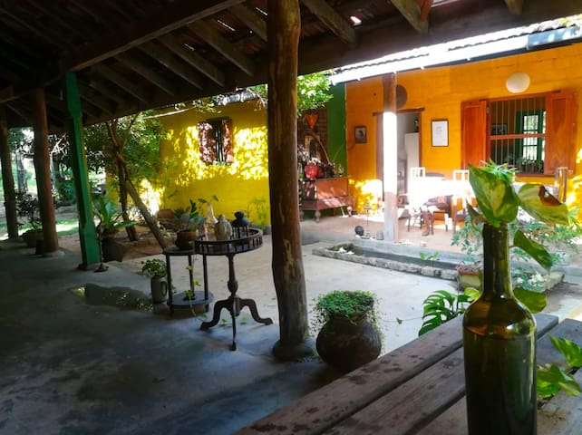 Villa of the Tree Frog – A nature-lover's getaway