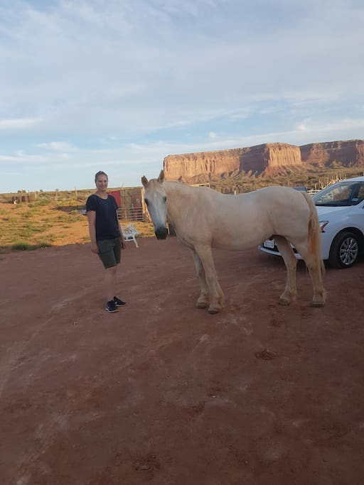 Guest with our gentle horse...at own risk u can ride horse ...we only have one ...that is gentle