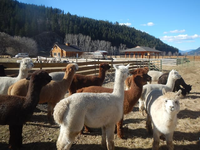 The Perfect Retreat and meet the Alpacas