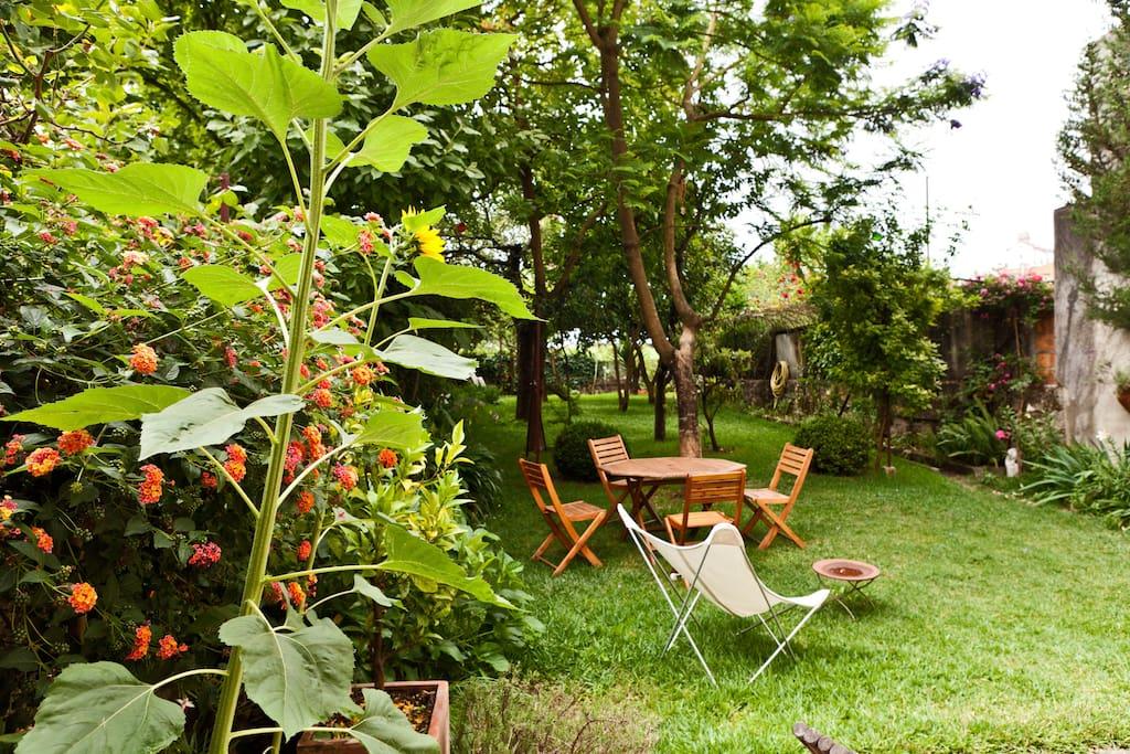 Jardim da casa