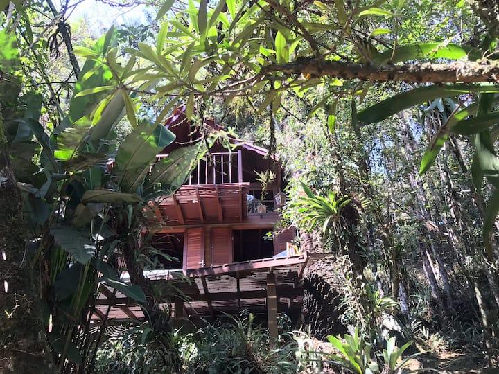 Casa da Árvore Cachoeira do Escorrega