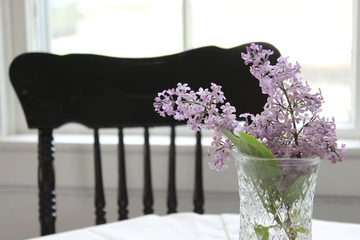 PEI lilacs - one of our favourite spring blooms!