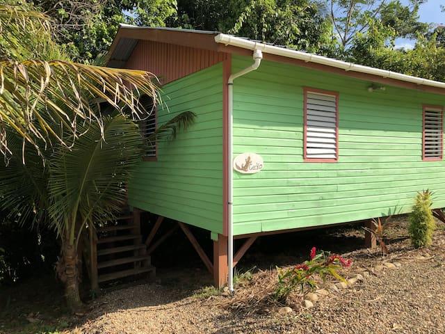 Gecko Cabin